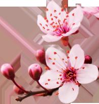 Bandes de cire froide aux extraits Fleur de Cerisier & Huile de riz
