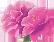 Cire divine Aisselles et Bikini À l'extrait d'Orchidée